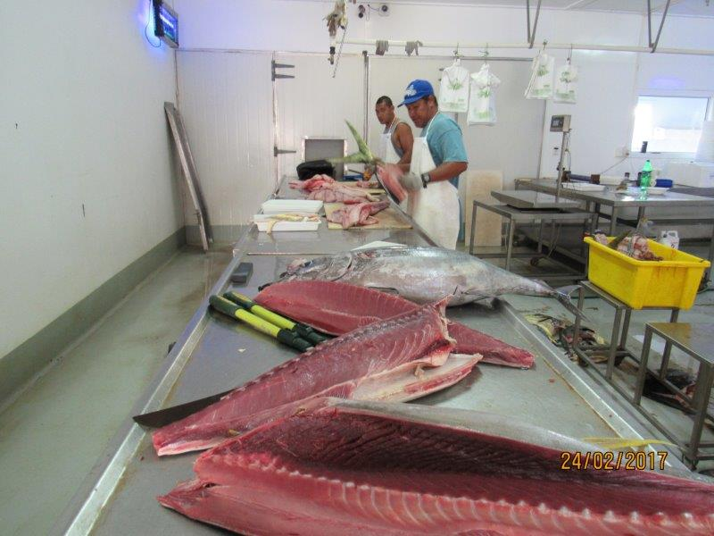 Rarotonga fresh fish business for sale new zealand for The fresh fish company