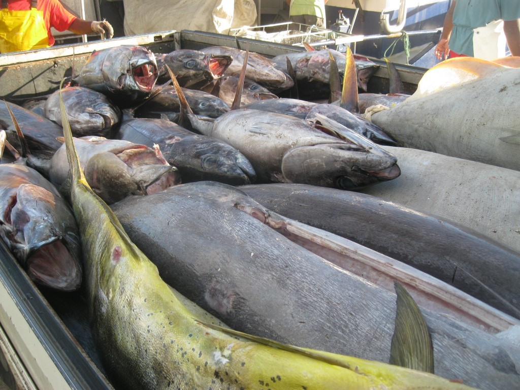Rarotonga fresh fish business for sale new zealand for New zealand fish